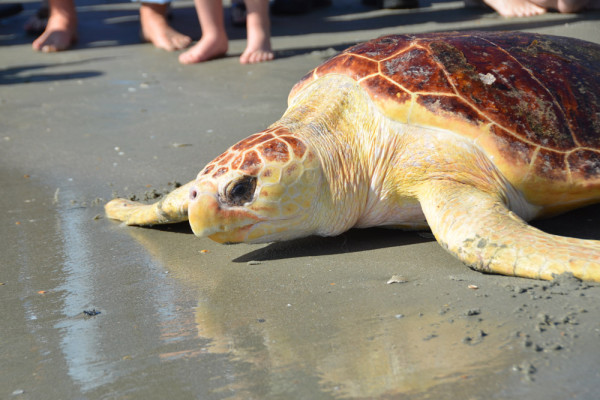 botany-south-carolina-aquarium-sea-turtle-rescue