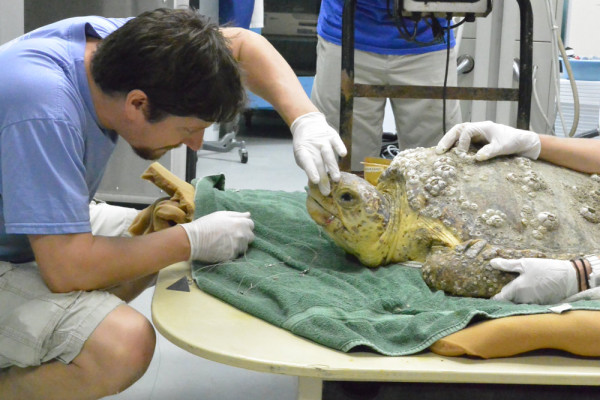 ranger-south-carolina-aquarium-sea-turtle-care-center