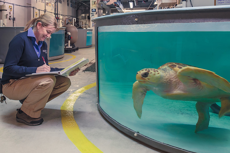 sea-turtle-hospital-tours-south-carolina-aquarium