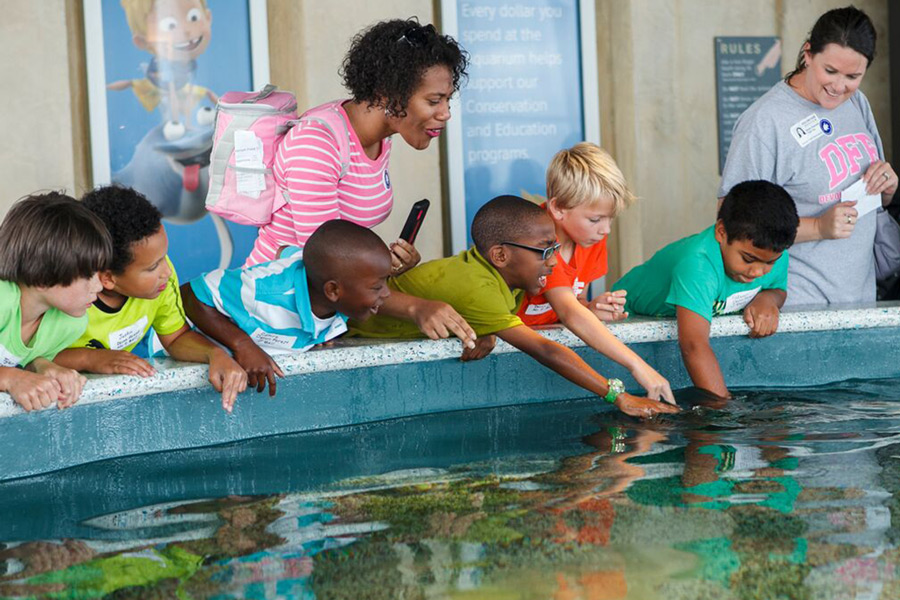 teachers-shark-shallows-south-carolina-aquarium